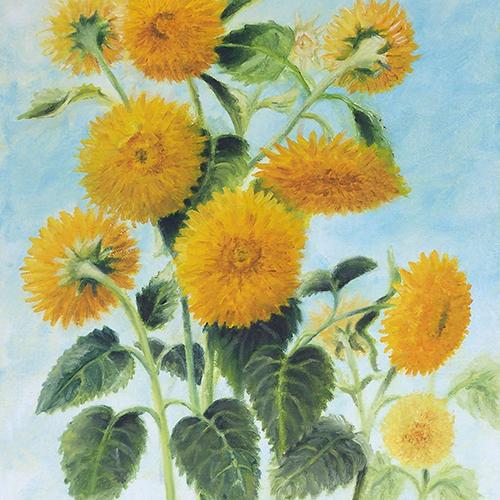 Teddybear Sunflowers